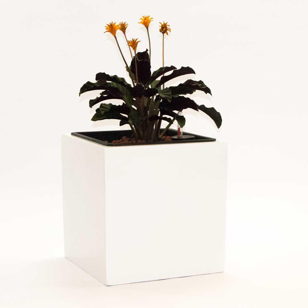 blumenk bel fiberglas quadratisch 38x38x38cm hochglanz wei. Black Bedroom Furniture Sets. Home Design Ideas